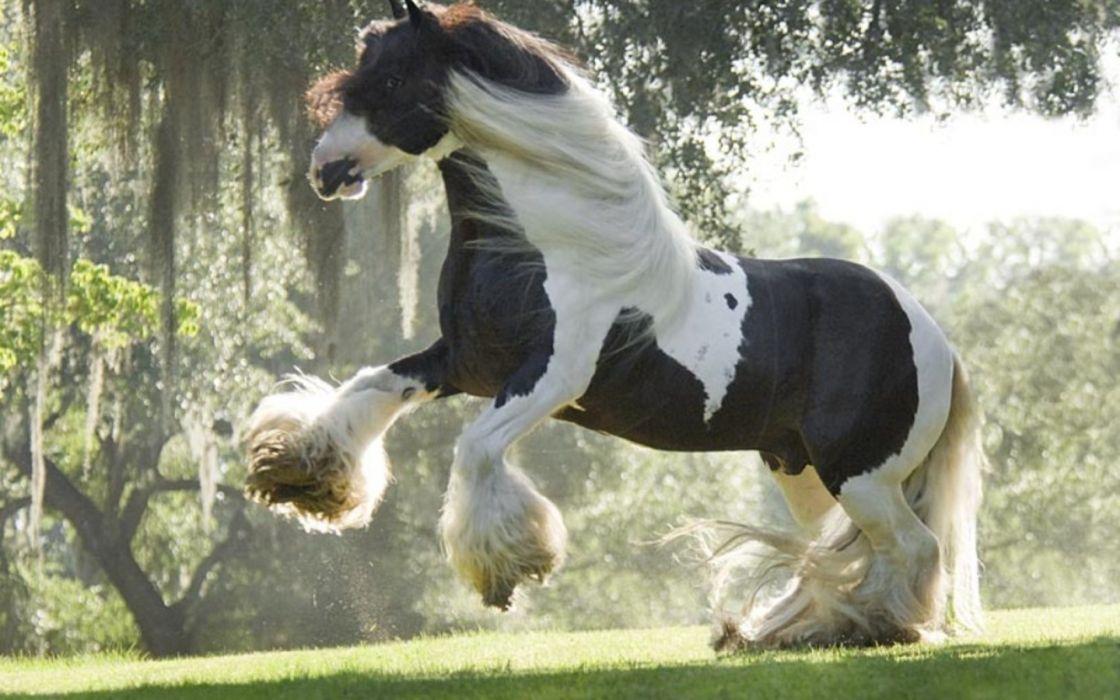 Beautiful Horse Wallpaper 1920x1200 1091182 Wallpaperup