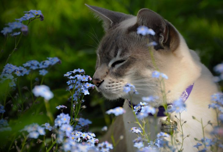 -cats-flowers wallpaper