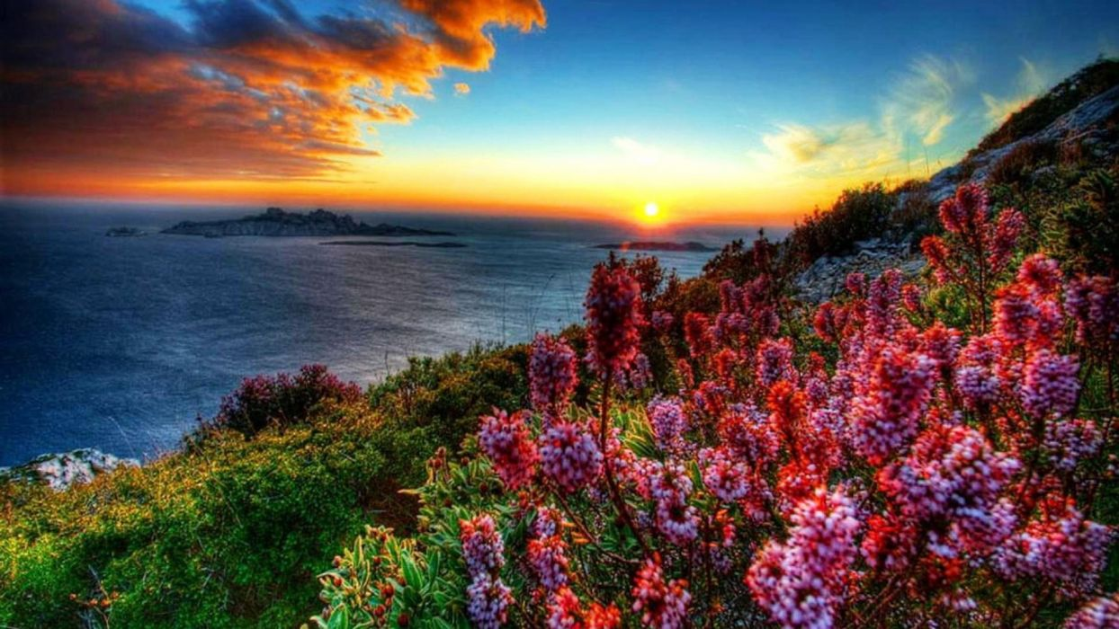 Coastal-flowers-at-sunset wallpaper