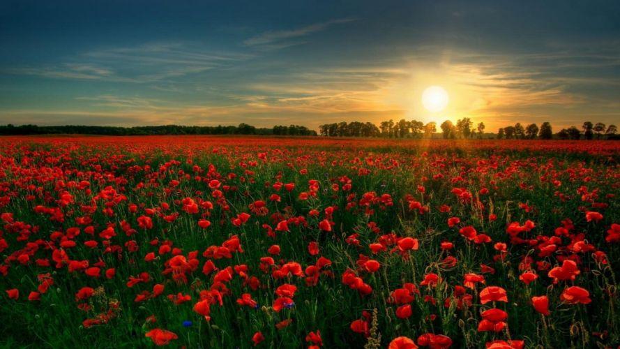 flower-at-garden-red wallpaper