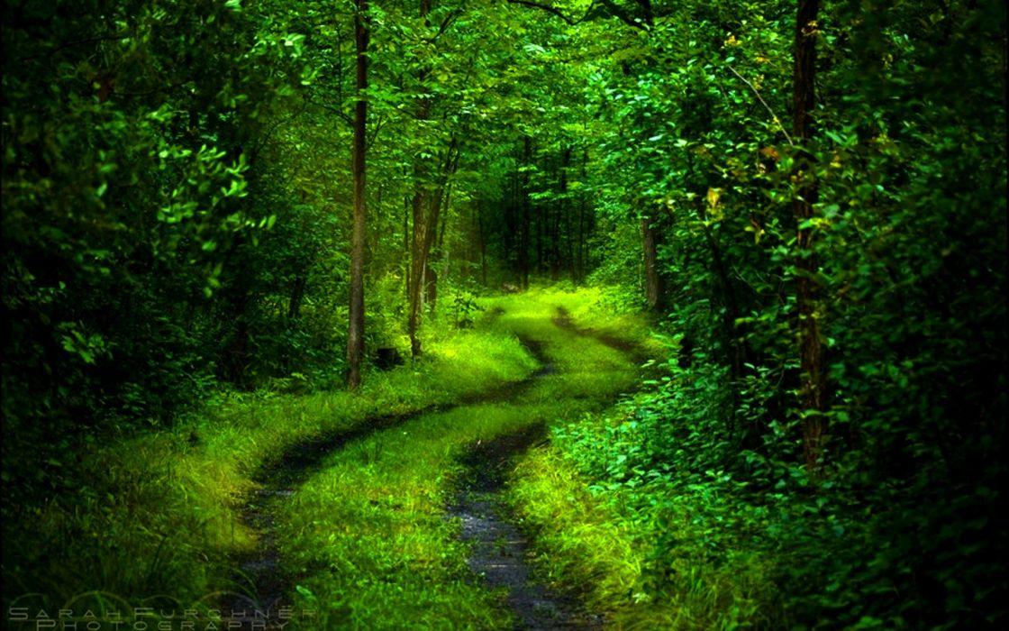 -forest-path wallpaper