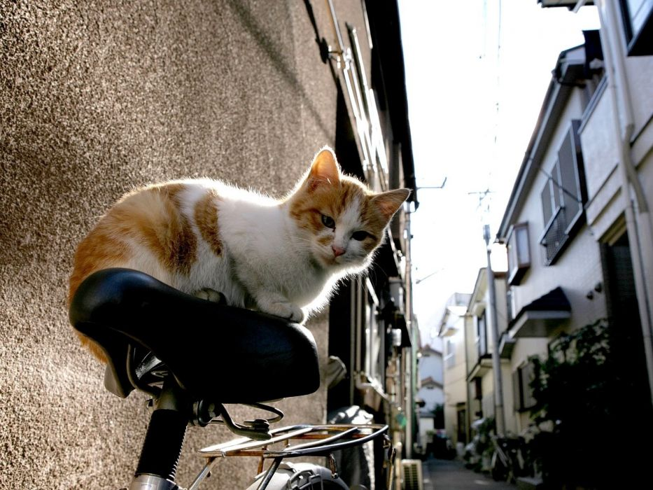 Photography-bicycle-animals-cat-japan-urban-city wallpaper