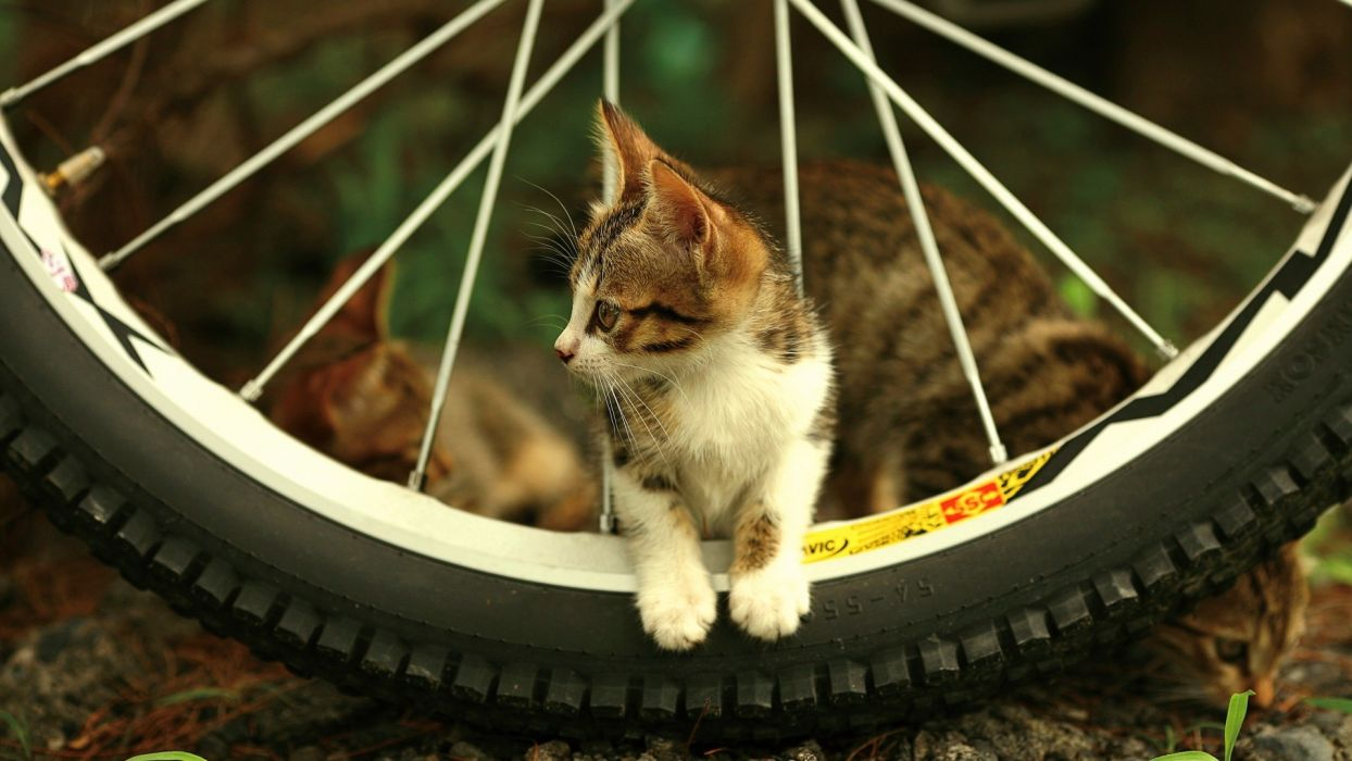 Photography-bicycle-animals-cat-tires wallpaper