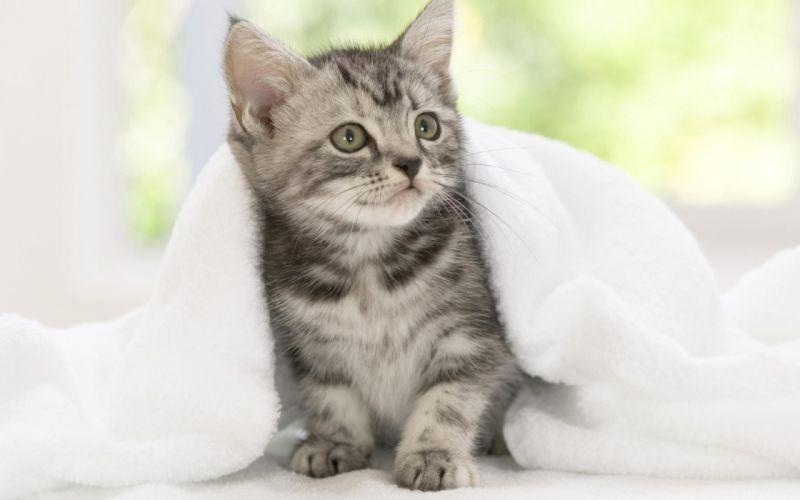 Funny-Surprised-Kitten wallpaper