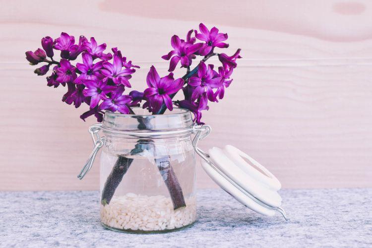 hyacinth flower blossom bloom pink fragrant flower spring flower glass vase decorative glass jar wallpaper