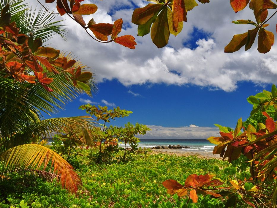 Access to the sea beach sea tree shore grass water clouds summer stone sky palm wallpaper