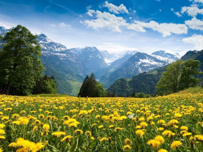 Dandelions and the Alps flowers mountains dandelion alps sky wallpaper