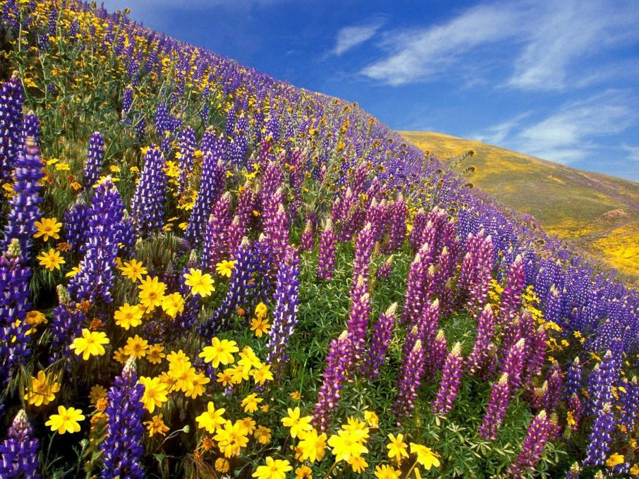 mountain meadows wallpaper