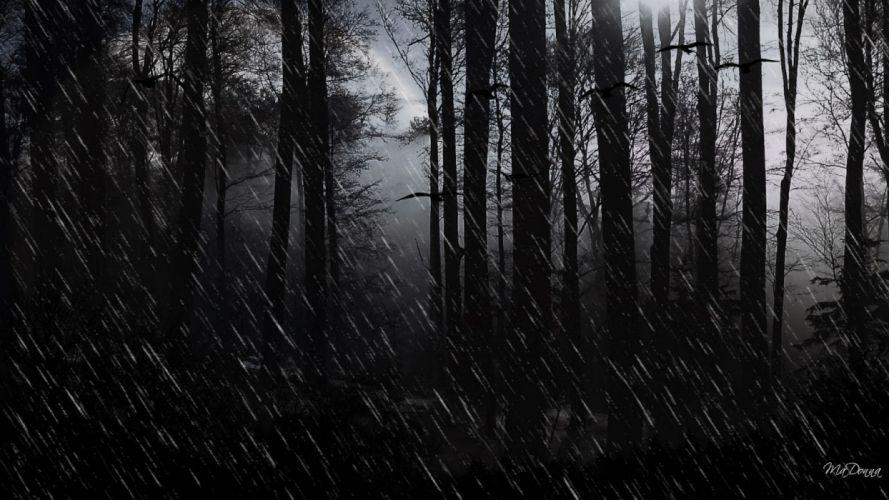bosque oscuro abstracto dark wallpaper