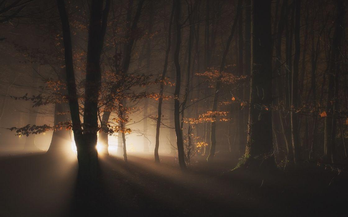 bosque oscuro dark luz wallpaper