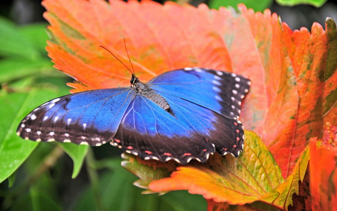 Nature animals insects leaves butterflies wallpaper