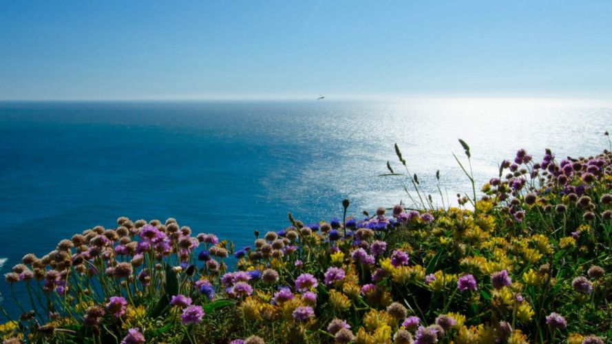 beach-flowers-blue-sea-landscape beach flowers beach wallpaper beautiful beach beautiful landscape blue sea landscape wallpaper scenery wallpaper sea beach sea coast sea landscape wallpaper