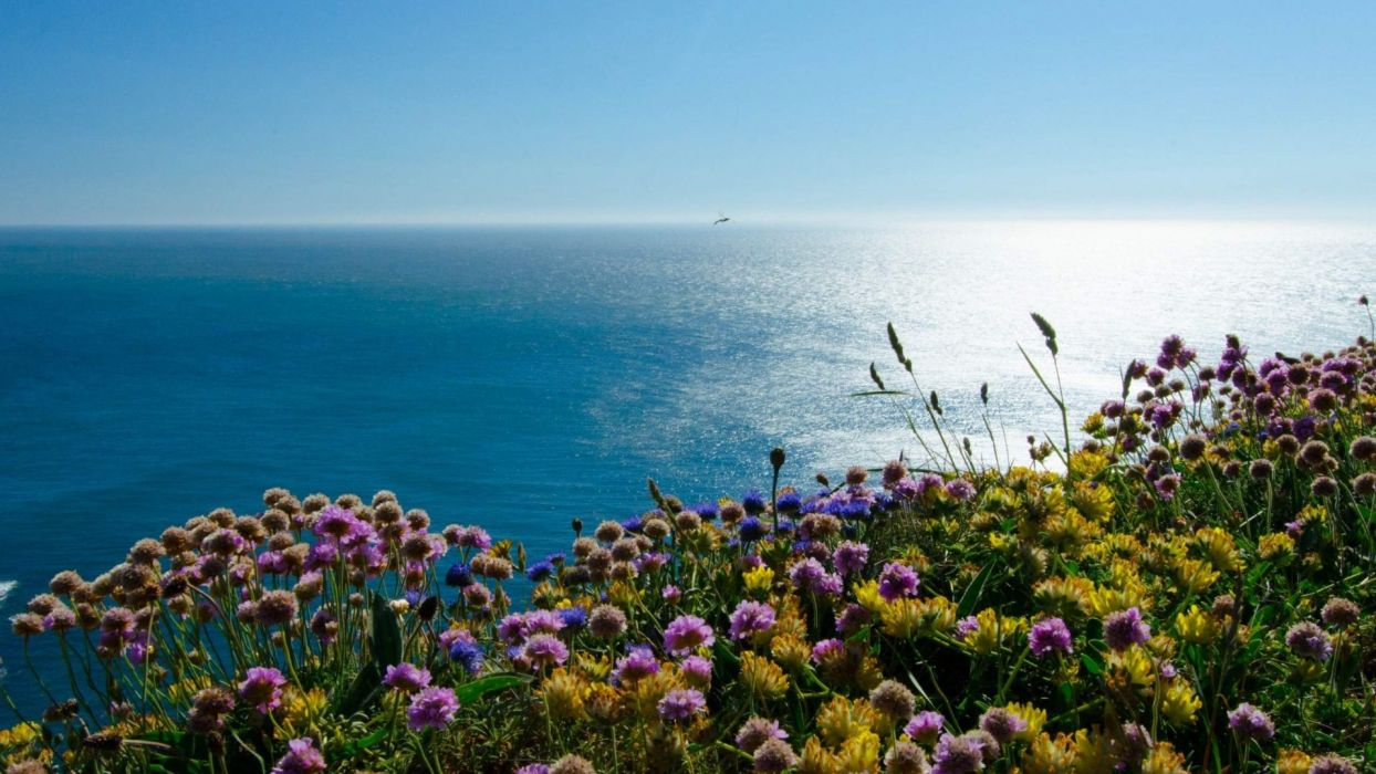 Beach Flowers Blue Sea Landscape Wallpaper Beautiful