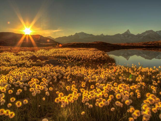 field sun rays flowers mountains lake reflections sunrise Switzerland daisies Schweiz Goms Bergsee wallpaper