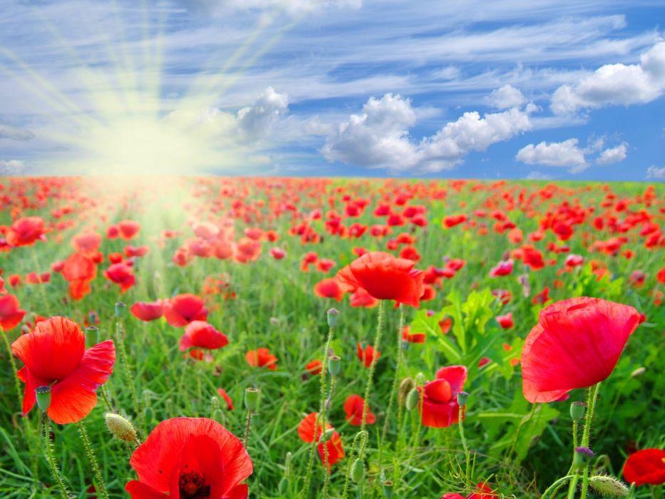 clouds sky poppies field sun red summer flowers wallpaper
