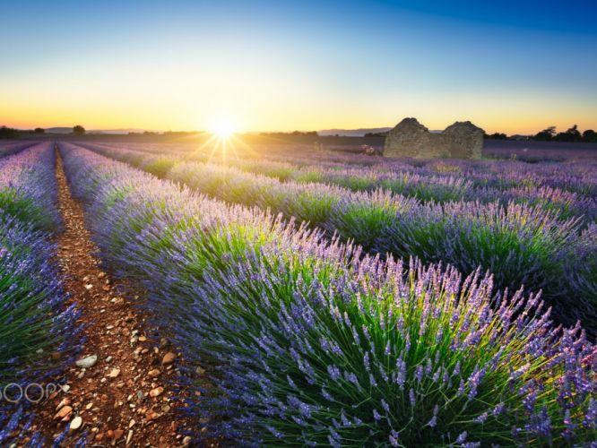 field nature summer sun France Lavender wallpaper