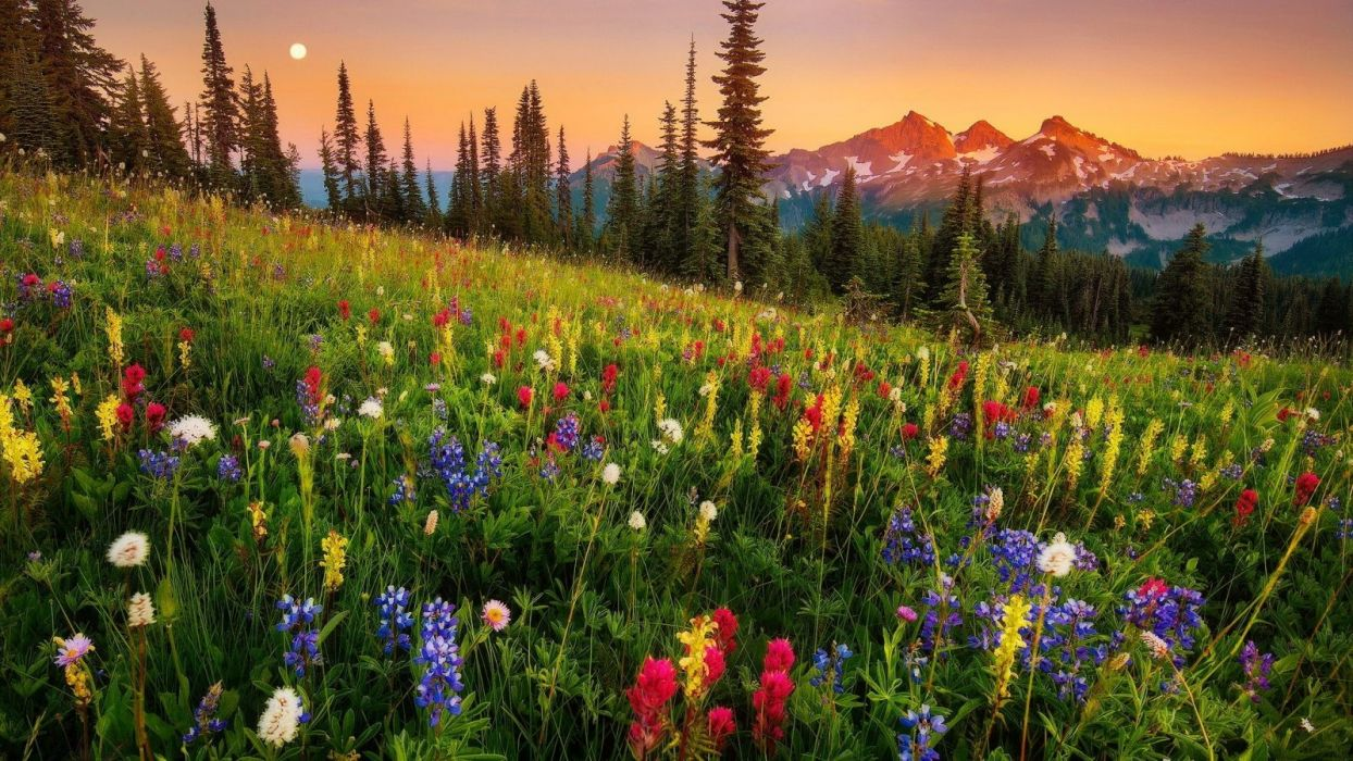 flower-colorful-lovely-nature-sunset-meadow-mountain-wildflowers-