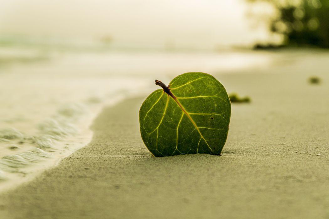 beach coast leaf ocean sand sea shore water wallpaper