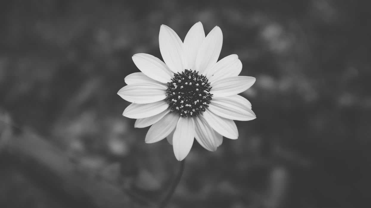 black-and-white bloom blossom flora flower macro nature wallpaper
