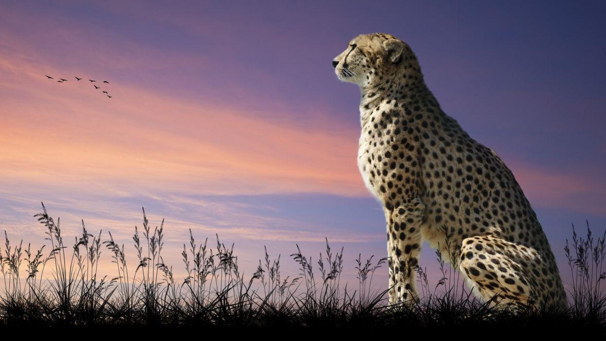 leopardo felino animal mamifero wallpaper