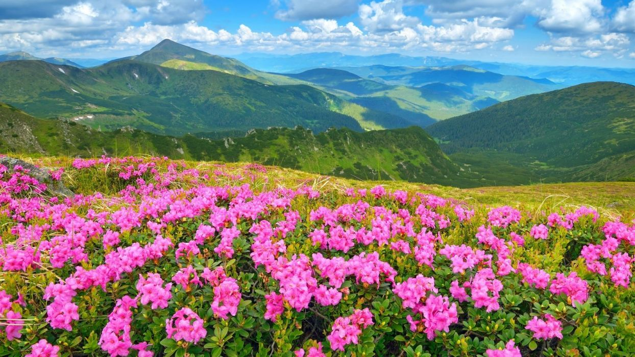 mountain-mountains-green-grass-springtime-sky-forest-blue-meadows-white-flowers-spring-beautiful-pink-clouds-nice- wallpaper