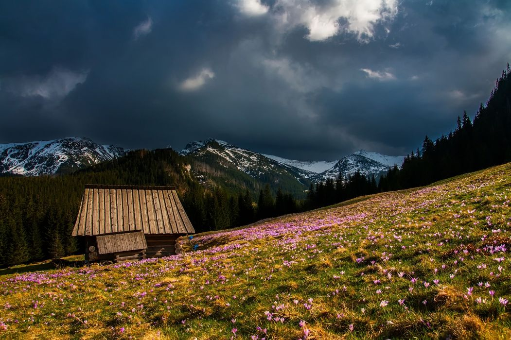 mountains landscape log cabin dark clouds clouds flowers plants spring wildflowers pastoral meadow valley house home nature outdoors country rural forest trees woods snow beautiful hdr free p wallpaper