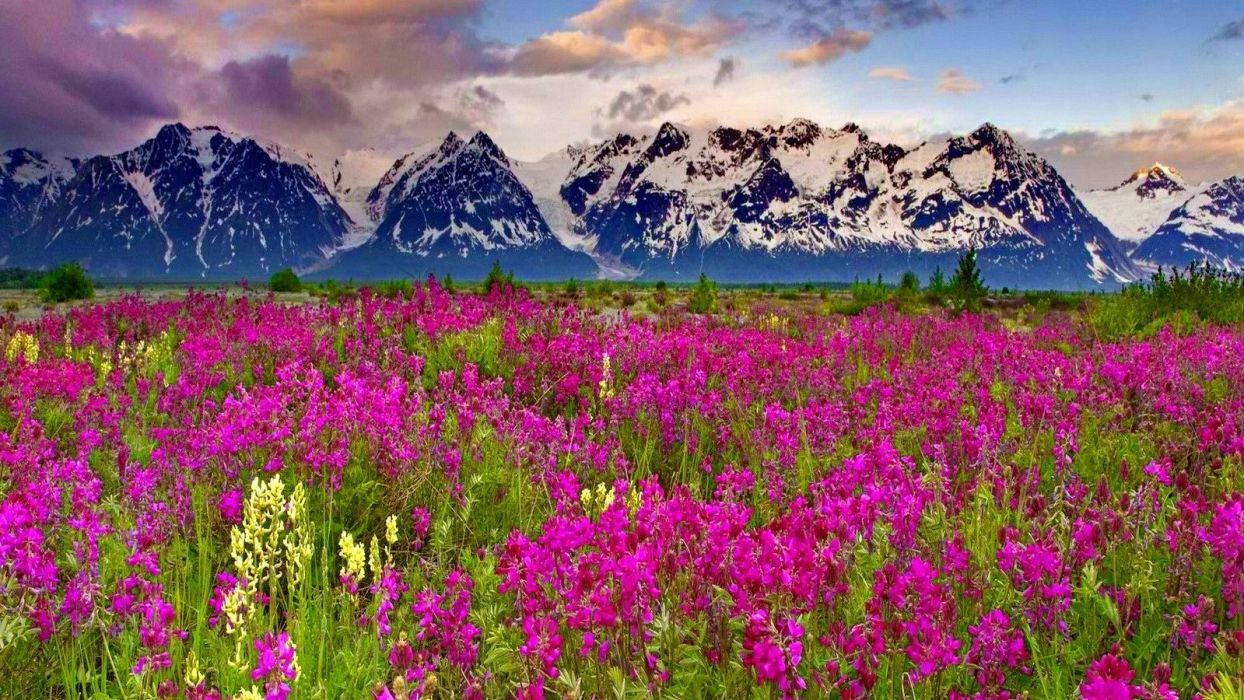 -mountain-slopes-nice-summer-field-nature-pretty-green-evening-clouds-beautiful-delight-grass-peaks-flowers-lovely-sky-meadow-alps-mountains wallpaper