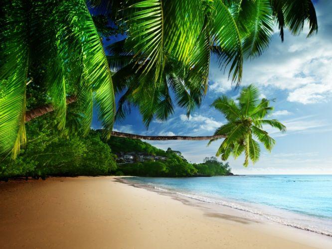 palm paradise The vacation coast beach shore by sunshine blue sand sea summer tropical ocean emerald sun by sky of palm beach sea sand ocean sky tropics wallpaper