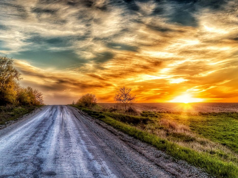 Rays of the sun on the forest road wallpaper