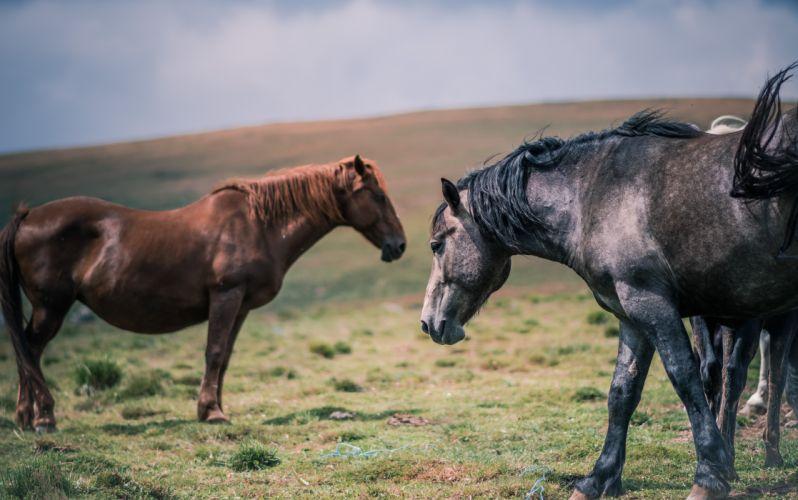 animals equine farm field grass horses livestock mane pasture wallpaper