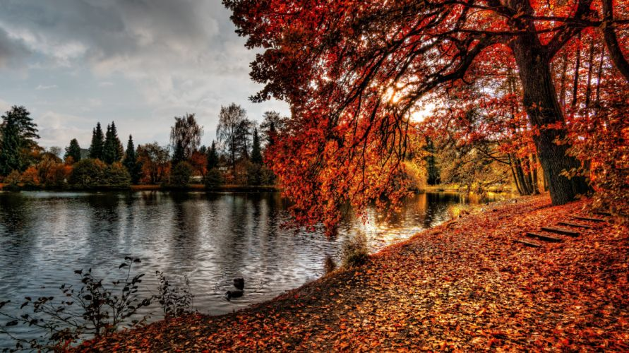autumn autumn leaves branch color dawn daylight environment fall forest lake landscape leaves maple nature outdoors park pond reflection river scenic season sun tree water wood wallpaper
