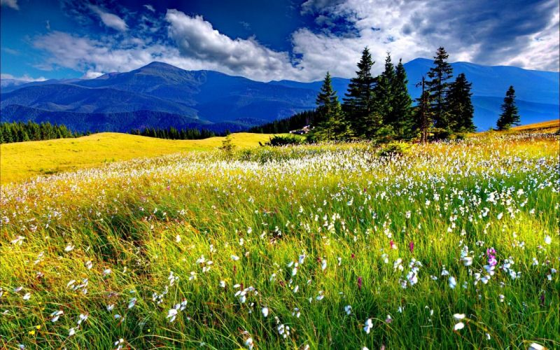 spring-meadow wallpaper