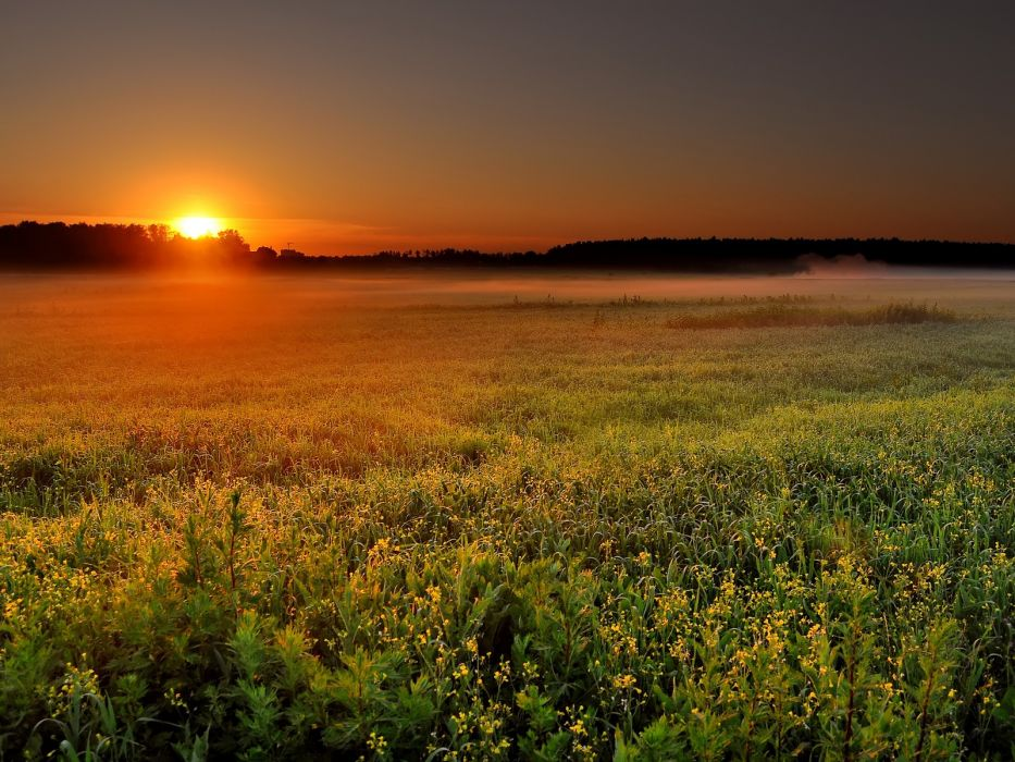 sunset flowers fogfield wildflowers wallpaper