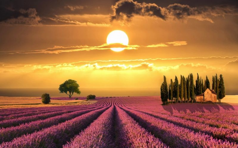 lavender field sunset clouds sky landscape wallpaper
