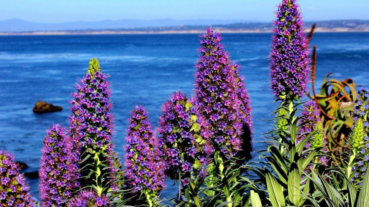 flowers-near-the-sea wallpaper