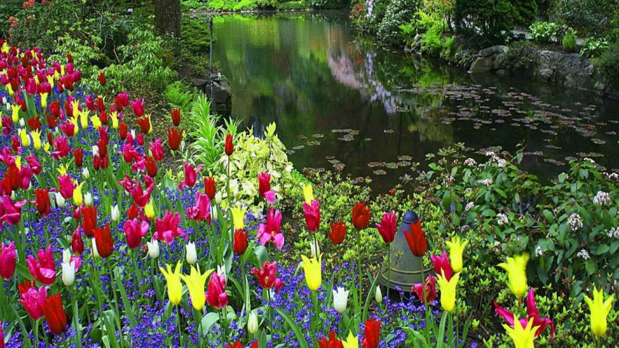 forest-floral-carpet sunny calm lake nice carpet flowers beautiful tulips waterfall flowers water wallpaper