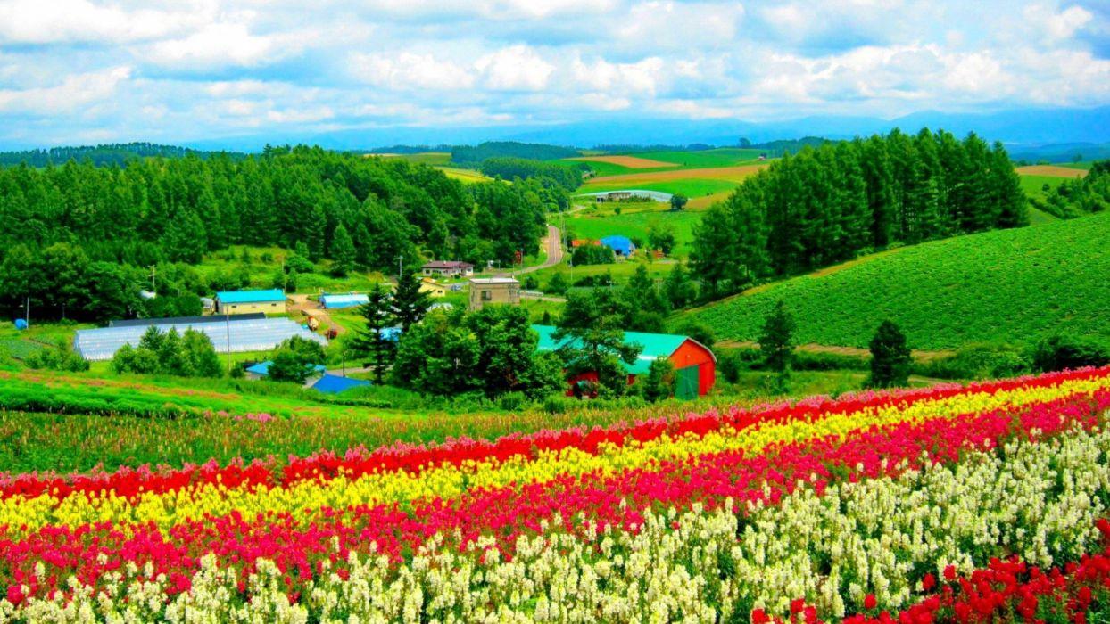 hokkaido-flower-field wallpaper