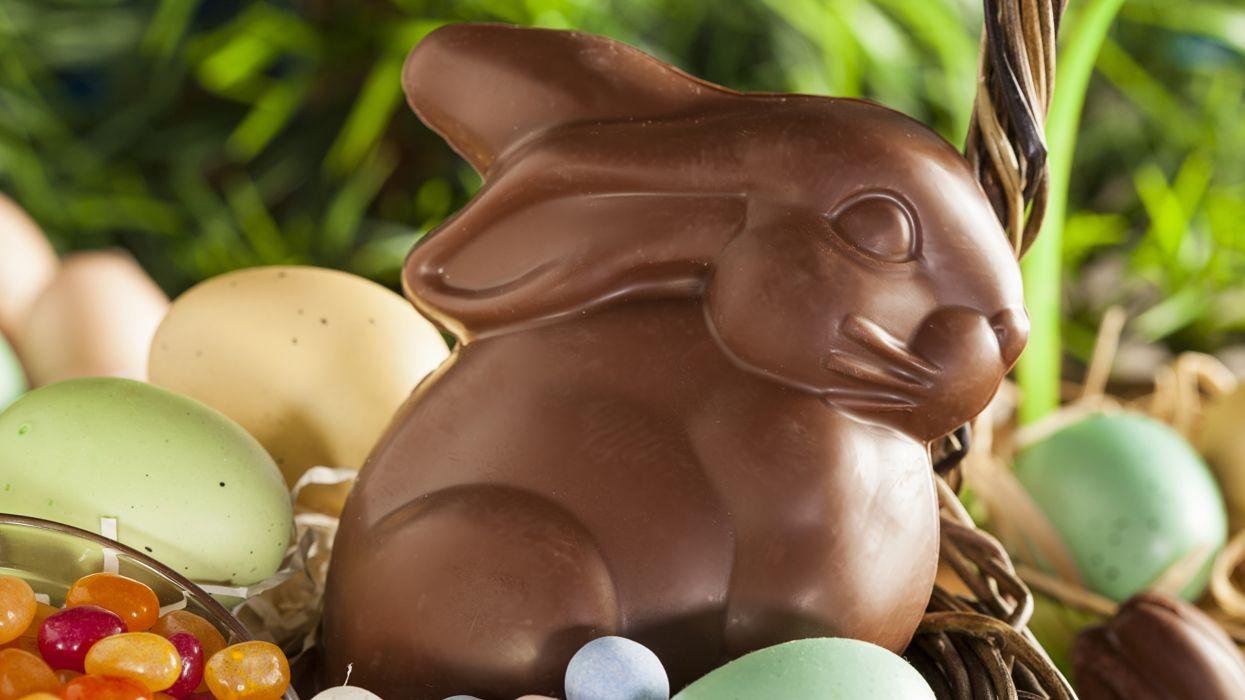 pascua conejo chocolate huevos wallpaper