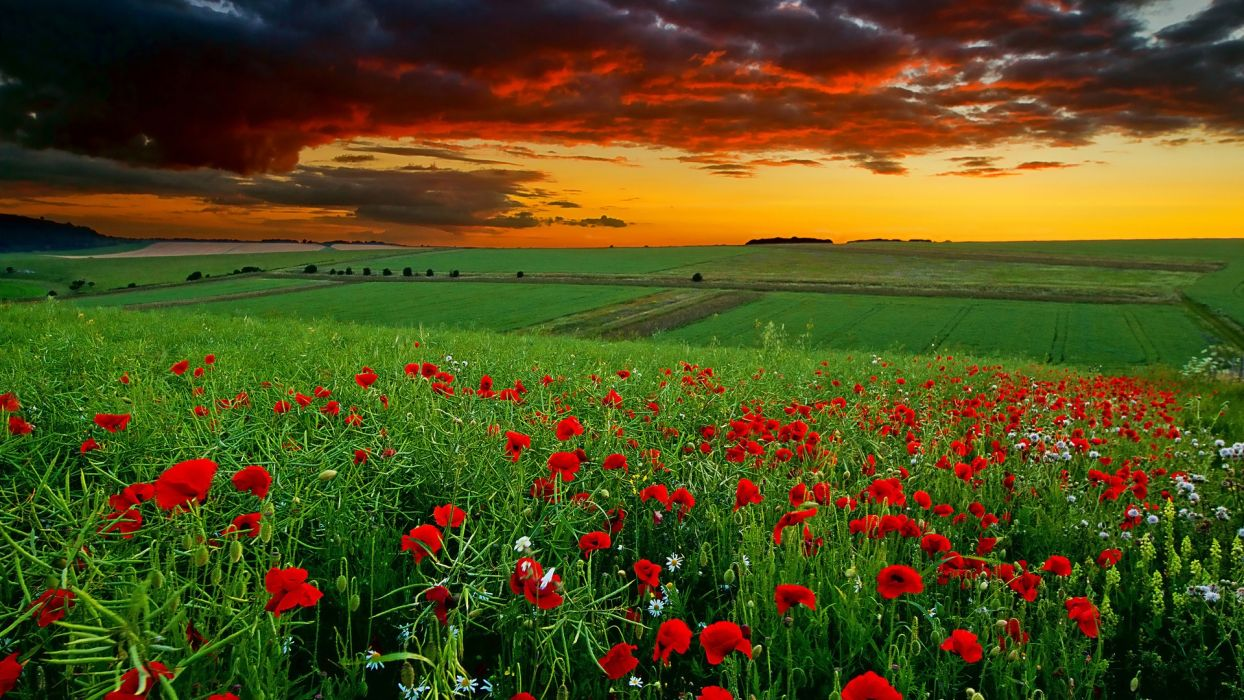 flower sky nature beauty clouds wallpaper