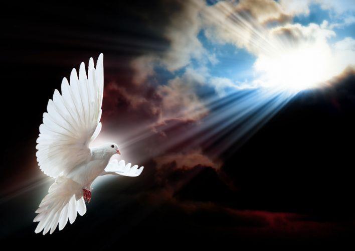 Birds Pigeons Sky Flight White Rays wallpaper
