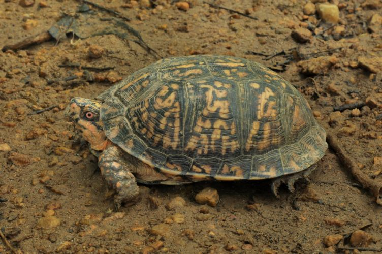Turtles Closeup Animals wallpaper