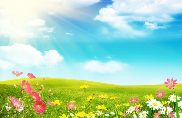 Sky Summer Grasslands Clouds Nature Flowers wallpaper