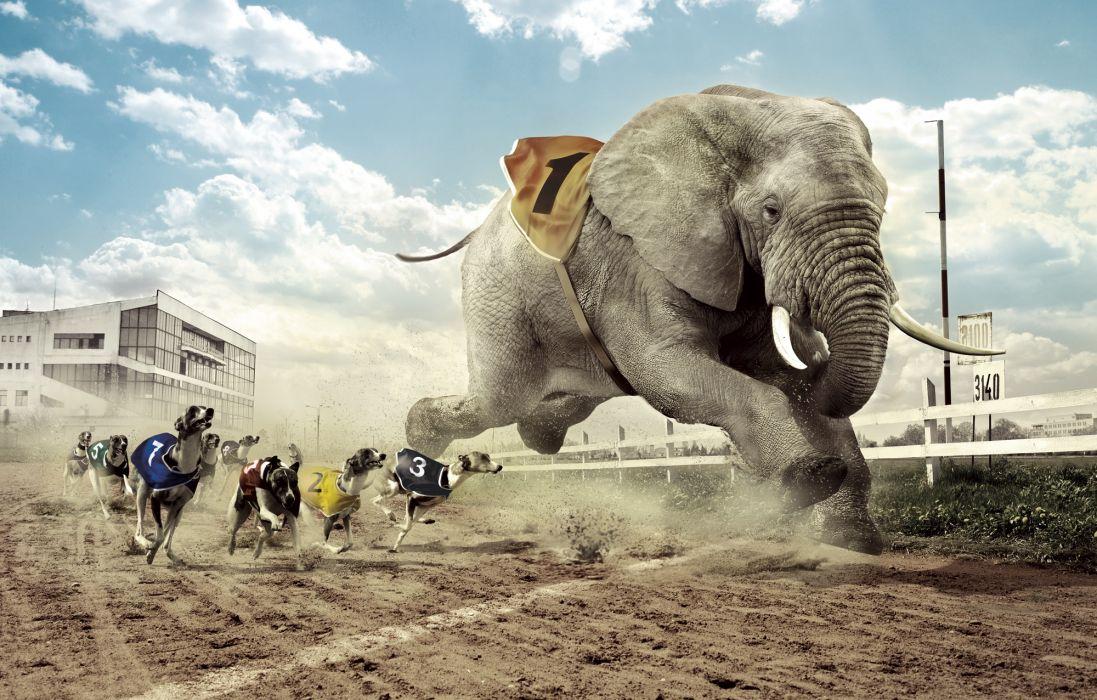 Creative Elephants Dogs Run Sighthound Greyhound Humor wallpaper