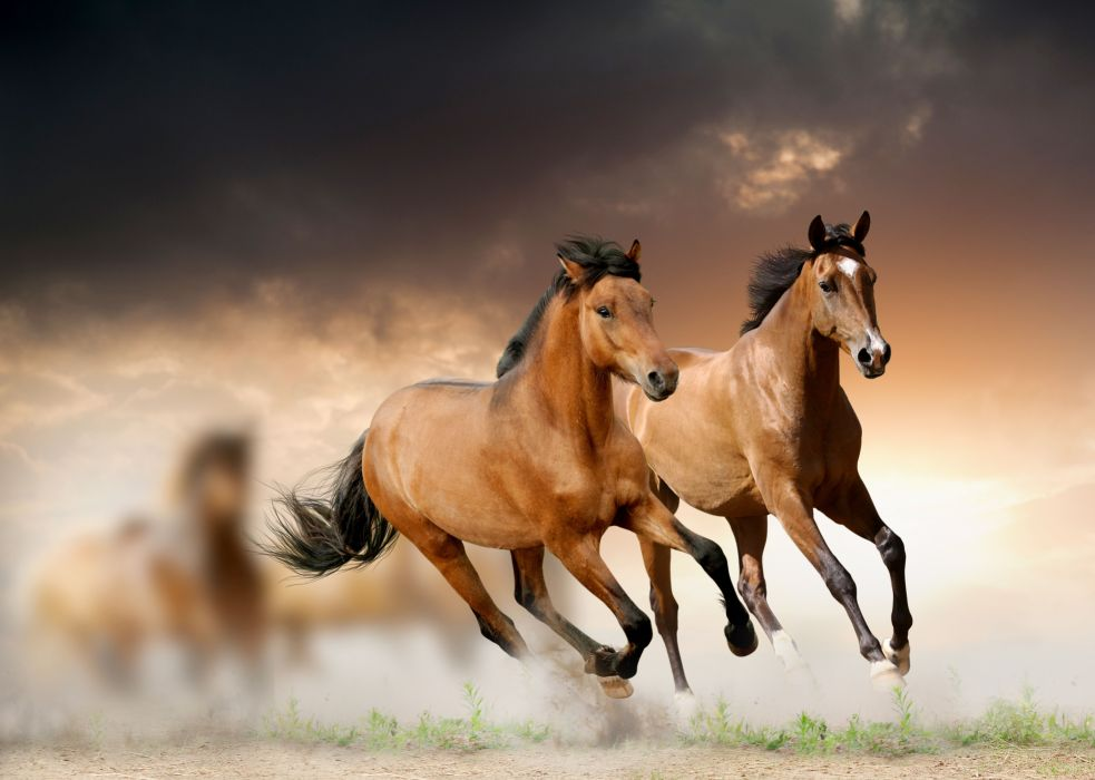Horses Run Animals wallpaper