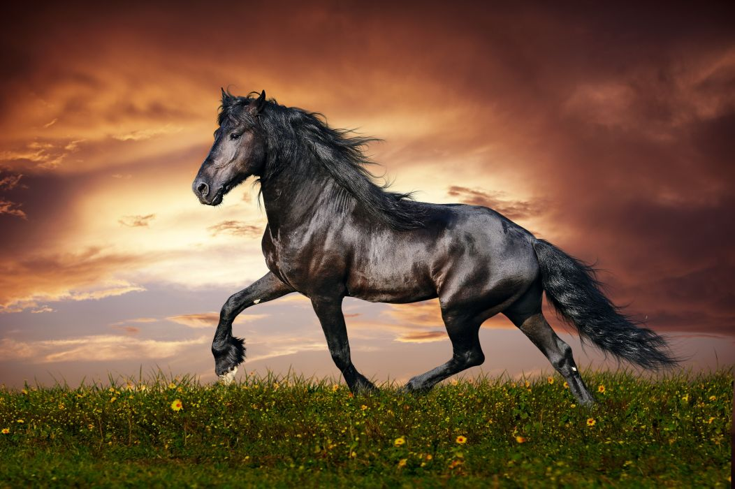 Horses Sky Black Tail Grass Clouds Animals wallpaper