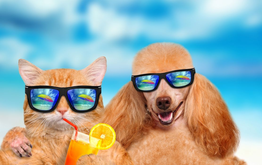 Cats Dogs Juice Two Poodle Glasses Funny Animals wallpaper