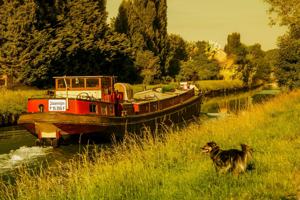 France Dogs Riverboat Canal Grass Nature wallpaper
