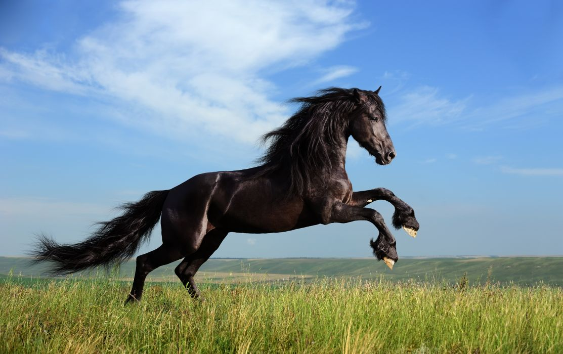Horses Sky Black Tail Grass Animals wallpaper
