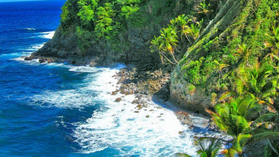 ocean-sea-view-trees-caribbean-morning-cliff-cove-seashore-blue-green-islands-beautiful-palms-dominica-white wallpaper