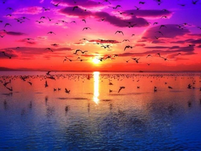 -sky-colorful-birds-dawn-pre-precious-paradise-four-summer-views-attractions-flying-dreams-creative-nature-seasons-sunrise-scenery-love-sea- wallpaper
